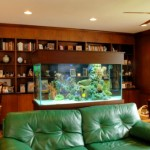 Amazing Home Aquariums Design Ideas