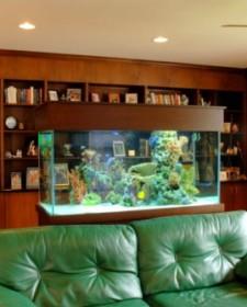 Amazing Home Aquariums Design Ideas