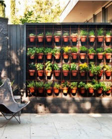 Create a beautiful vertical garden inside your house