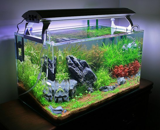 Myths about keeping an aquarium at home for Good fish for small tanks