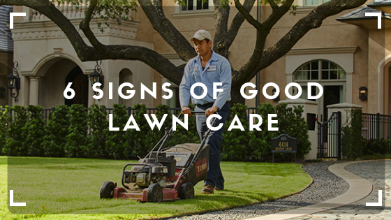 6 Signs of Good Lawn Care