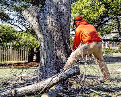 Buffalo Olive Branch Tree Removal Tips For Preparing For Tree Removal