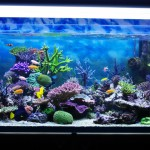 Myths about keeping an aquarium at home