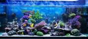 Aquarium-corals-reef