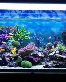 Myths about keeping an aquarium at home