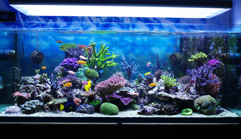 Myths about keeping an aquarium at home for Best fish for reef tank