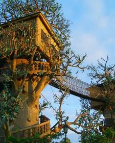 Tree Home Design Ideas