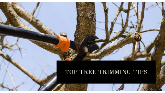 Top tree trimming tips