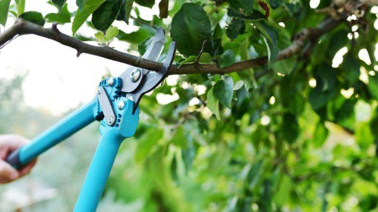 How to Prune Trees: Your Guide to Awesomeness