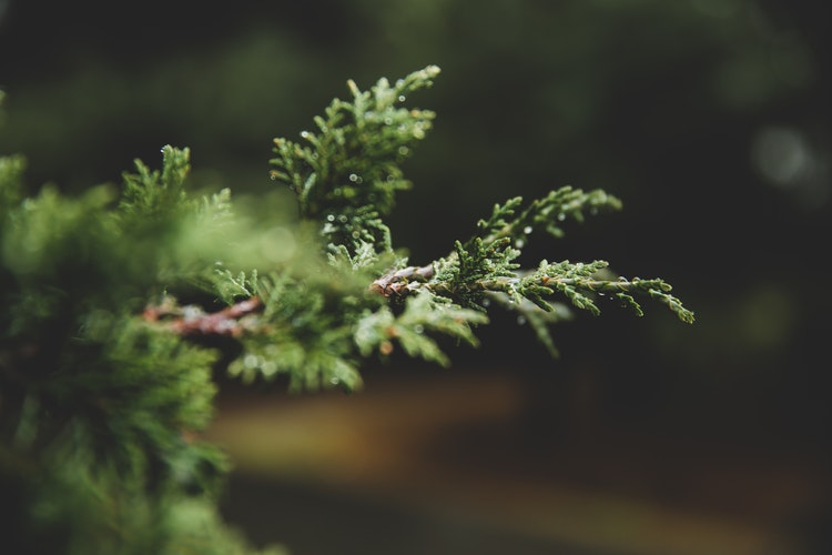 Deploying Evergreens As Stylish Outdoors Talking Points