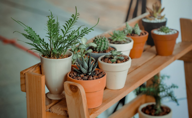 Tips for Decorating Your Home with Plants