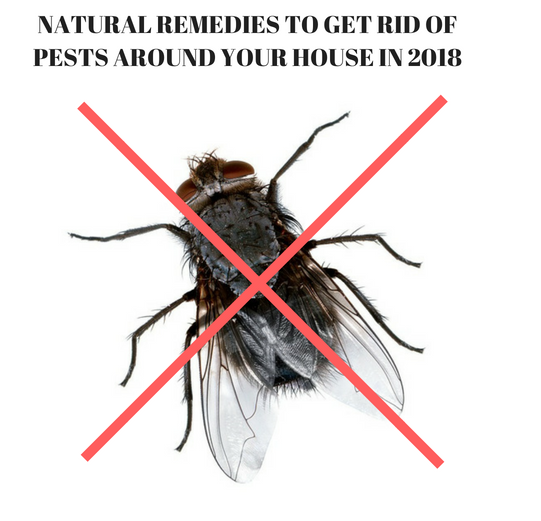 NATURAL REMEDIES TO GET RID OF PESTS AROUND YOUR HOUSE IN 2018